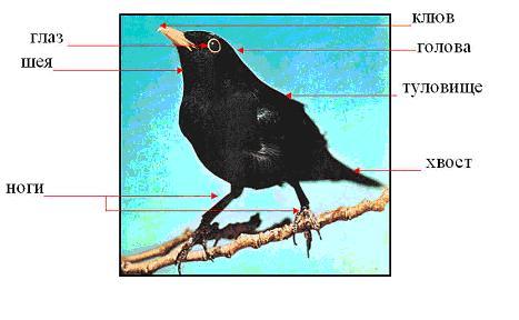 Внутреннее строение птицы барельеф